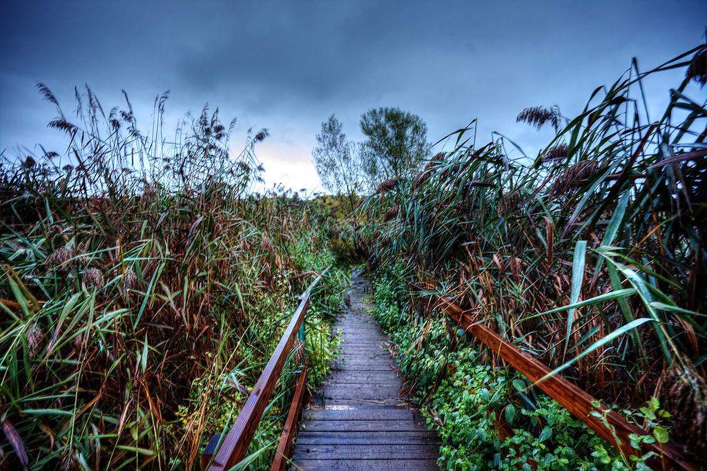 Bridge over Broadleaf Wetland in the Esopus Estuary.