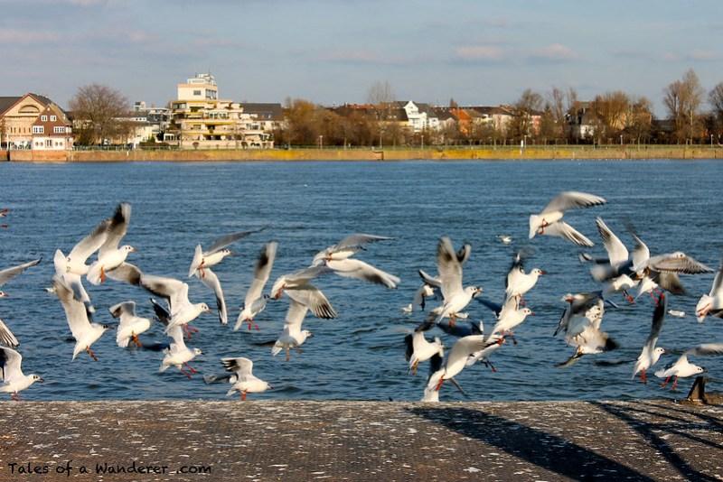 MAINZ - Der Rhein