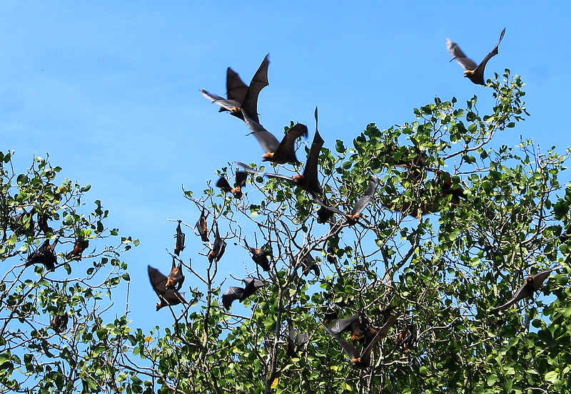Bualu Bat Sanctuary, Maimbung, Sulu