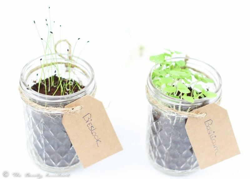 diy kruiden plantjes