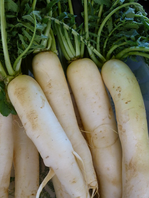 Daikon definitionmeaning