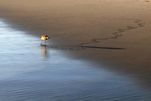 20141013_Huntington_Beach_018
