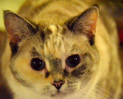 cat.1.2