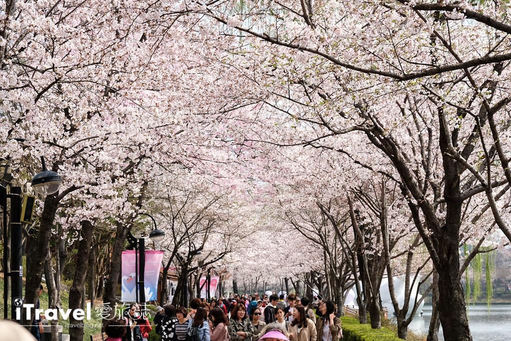 首尔赏樱景点 乐天塔石村湖 (15)
