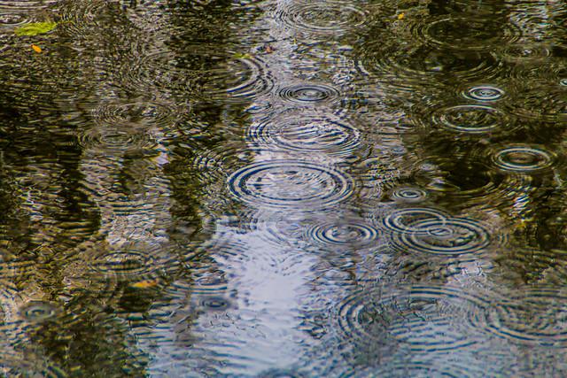 Regen im Vondelpark