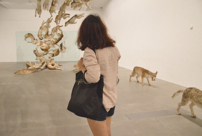 Gallery of Modern Art, Brisbane, Cai Guo-Qiang: Falling Back to Earth, photography