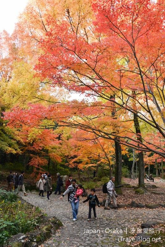 大阪赏枫 万博纪念公园 红叶庭园 08