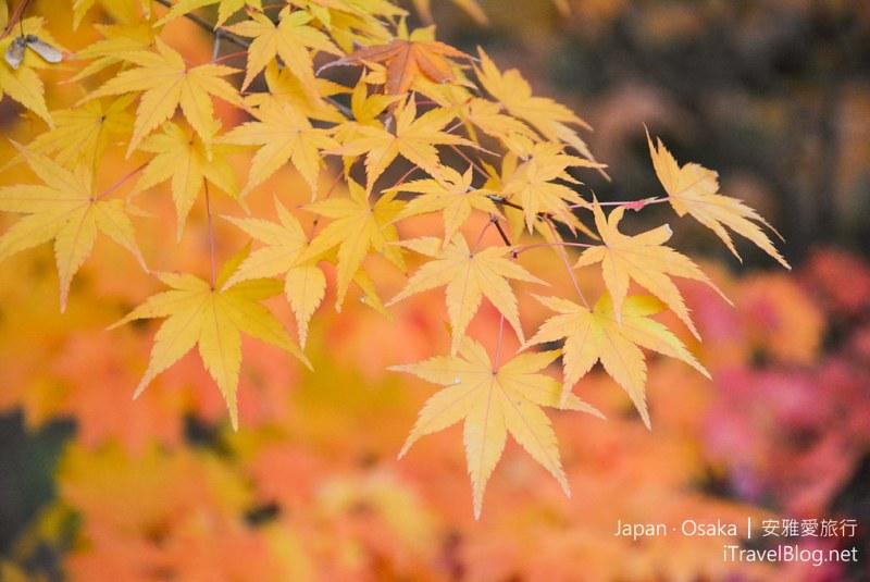 大阪赏枫 万博纪念公园 红叶庭园 26