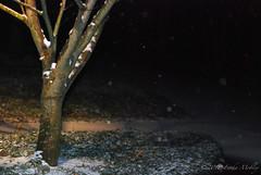 Georgia Snow!