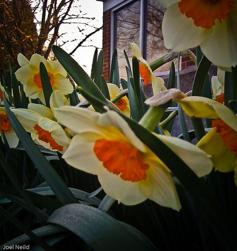 MMX 091 Flowers