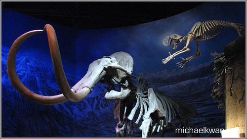 Look Out Behind You! - Royal Tyrrell Museum