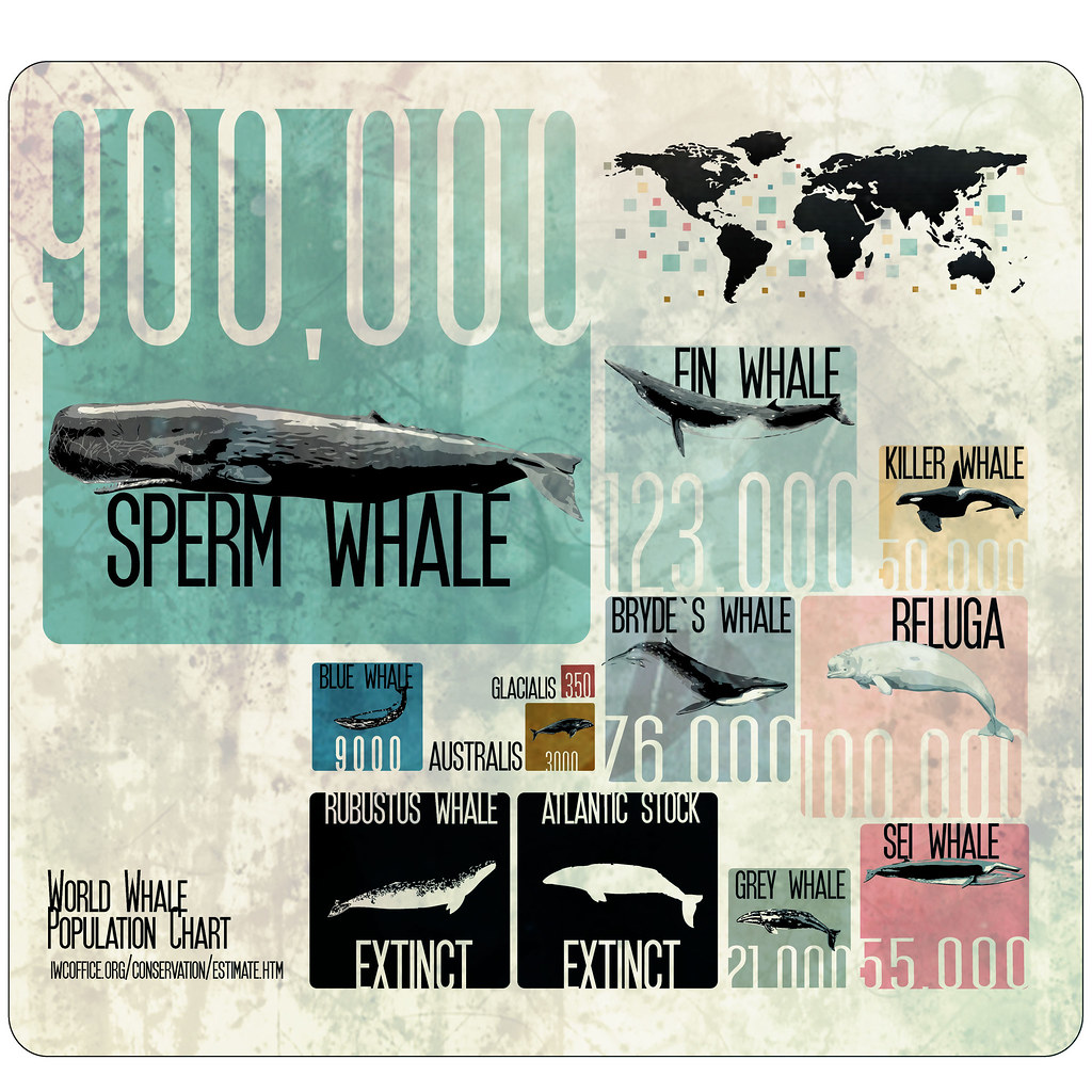 world whale population chart