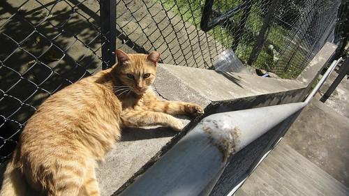Sunbathing Cat