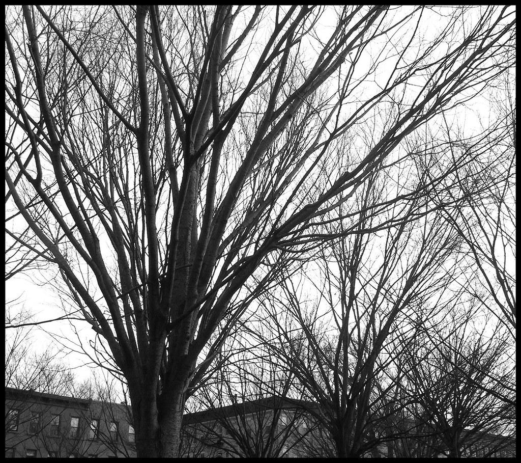 Trees, Brooklyn