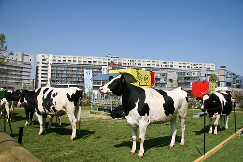 Urban cows in Paris