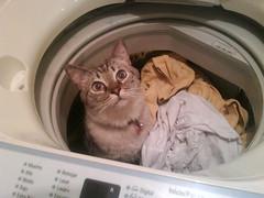 Aníbal en la lavadora