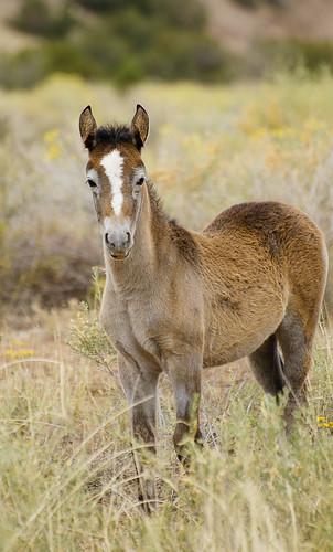 NM Wild Horses (57) nwm