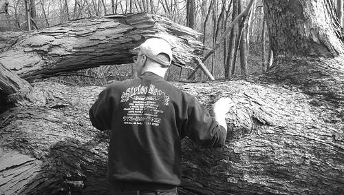 me with fallen oak