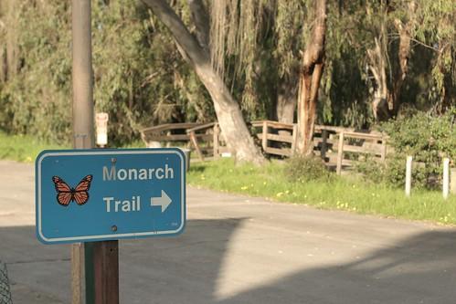 Monarch trail at Natural Bridges