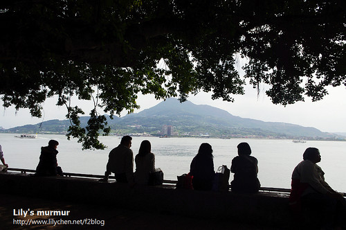 淡水景觀步道的榕堤一景。