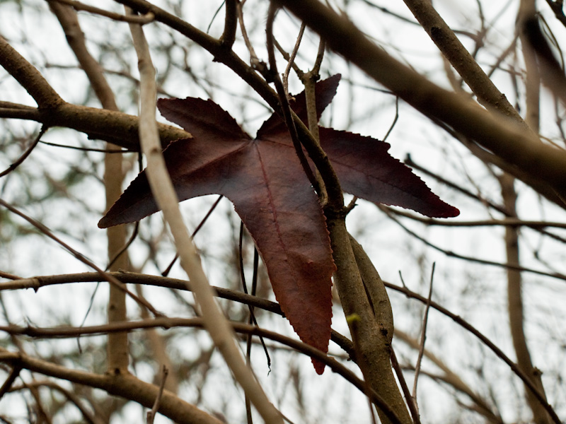 Leaf, Caught