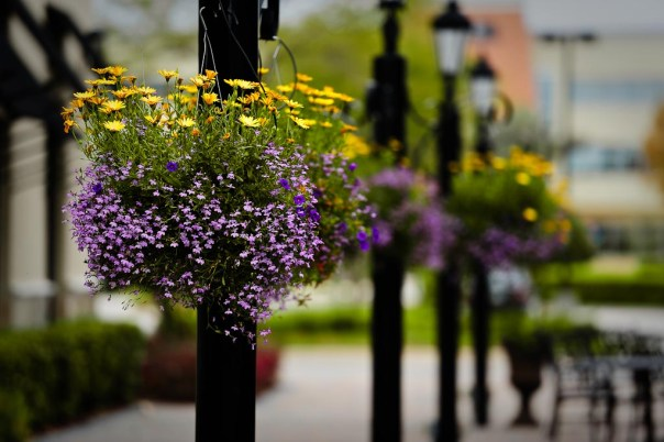 Flower baskets and street lights