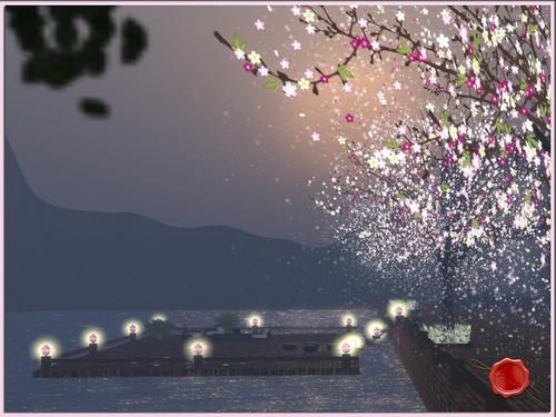 100415cherry blossom001