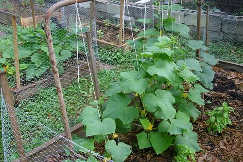 Garden progress June 2