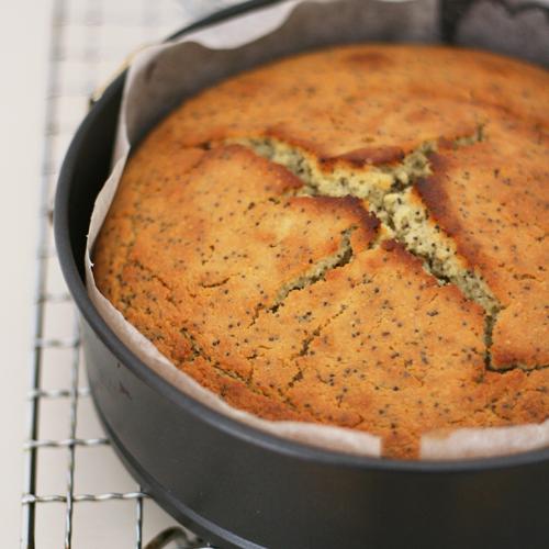lemon poppyseed cake (14th June)