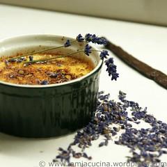 Crème brulée mit Lavendel 1_2010 06 17_7675