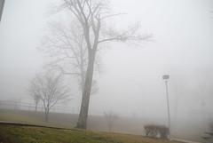 Fog 043