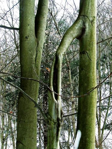 ring tree closeup