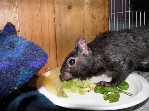 Mickey eats breakfast