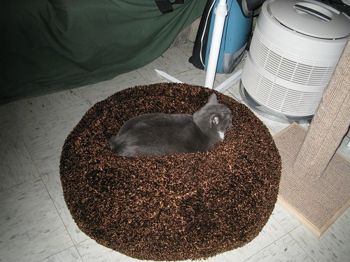 A shot of Fey in her bed that's far enough away that you can see the entire bed, which is a big brown fuzzy circle, with a cat lying down in the middle of it, causing a dent in the brown fuzzy stuff where the cat is.