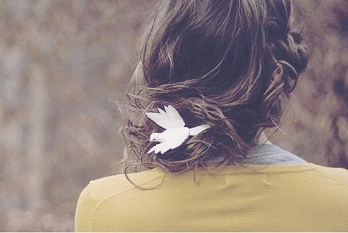 Yellow dove