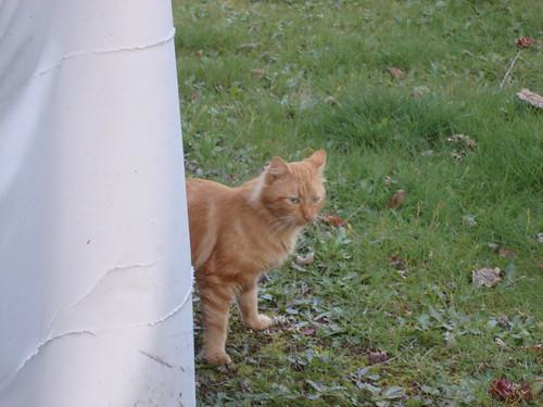 Orange kitty 2.
