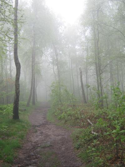 Nebel auf dem Großen Zschirnstein