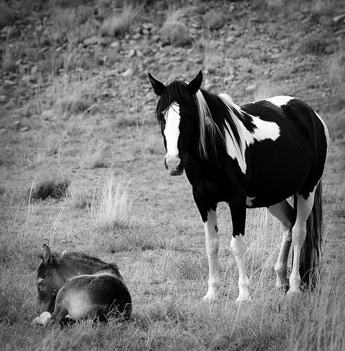 NM Wild Horses (60) nwm