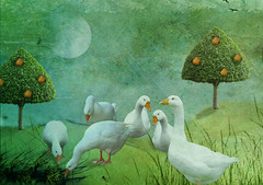 Six Geese A-Laying