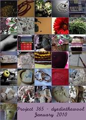 Project 365 January 2010 mosaic (by dyedinthewool)