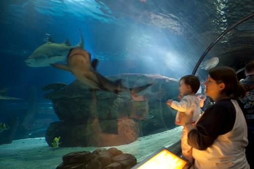 Hannie watches sharks