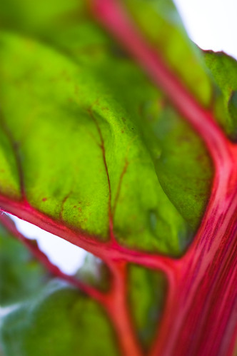 abstract chard (by bookgrl)