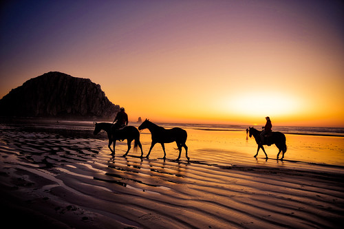 Morro Bay : Horses on the beach