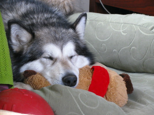 I like the stuffed bear