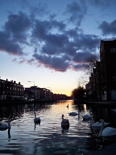 swans on the Grand Canal near Portobello at sunset 4