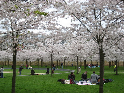 Cherry Blossom Park in Amsterdamse Bos
