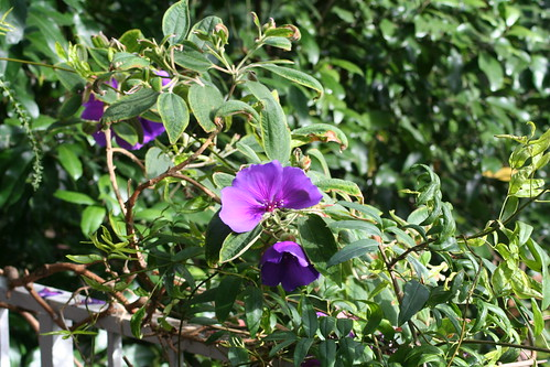 20090919 Edinburgh 20 Royal Botanic Garden 255