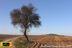 Campos de Madridejos - Norte