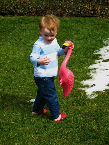 Boy & Flamingo