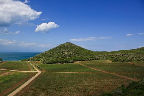 Vineyards of Chilandar